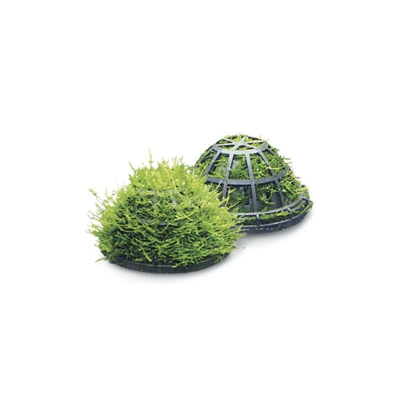 dome support de plante d 39 aquariums d coration aqua occaz. Black Bedroom Furniture Sets. Home Design Ideas