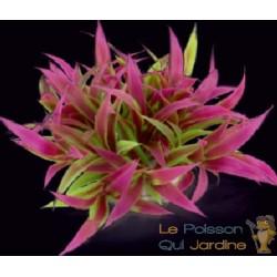 Plante plastique rose et verte pour aquarium : 10cm