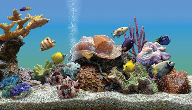 Tous les accessoires  pour aquariums marins